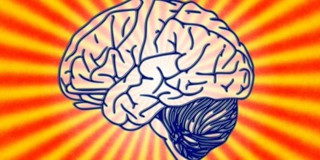 ADHS Gehirn
